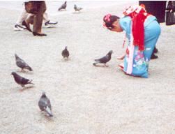 feedingthebirds.jpg